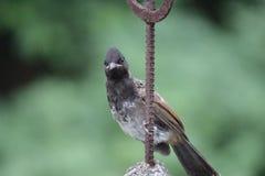 Observación de pájaros Fotos de archivo libres de regalías