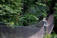 Observación de pájaros en el puente del toldo de bosque Fotografía de archivo