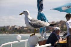 Observación de pájaros marina en el mar Fotografía de archivo