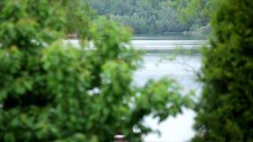 Observación de un río y de poca casa a través de las hojas de los árboles verdes metrajes
