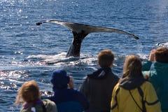 Observación de la ballena Fotos de archivo libres de regalías