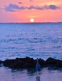 Observador do nascer do sol Foto de Stock