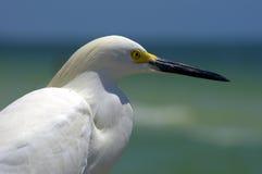 Observadores do mar Foto de Stock Royalty Free