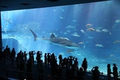 Observadores do tubarão Fotos de Stock Royalty Free