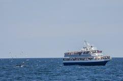 Observadores e gaivotas da baleia foto de stock