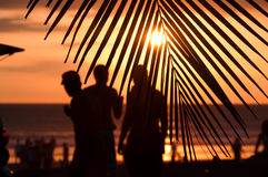 Observadores tropicais do por do sol fotos de stock