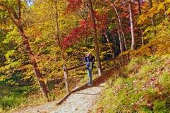 Observateur d'oiseau sur une recherche de forêt d'automne Photographie stock
