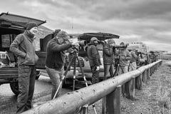 Observateurs de faune observant un troupeau de loups un jour pluvieux froid photo stock