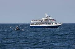 Observateurs et mouettes de baleine photographie stock libre de droits