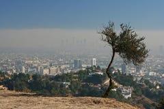 Observation au-dessus de la ville Photographie stock