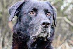 Observation av hunden Fotografering för Bildbyråer
