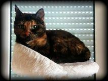 Observation av katten royaltyfria bilder