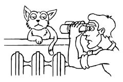 Observation of the cat. Stock Photo
