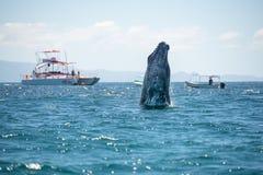 Observation d'humain de baleine Photos stock