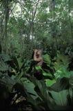 Observation d'oiseau au Tobago Image libre de droits