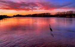 Observation d'oiseau le coucher du soleil Photo stock