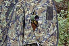 Observation d'oiseau sans visibilité de peau Image libre de droits