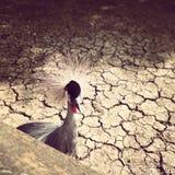 Observation d'oiseau vous Photos stock