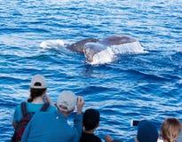 Observation de baleine Photographie stock