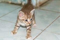 Observation de chaton Photo libre de droits