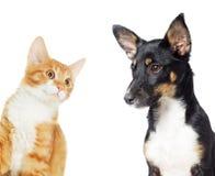 Observation de chaton et de chiot Image stock