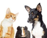 Observation de chaton et de chiot Photographie stock libre de droits