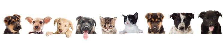 Observation de chaton et de chiot Photo stock