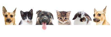 Observation de chaton et de chiot et de lapin Photographie stock
