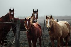 Observation de chevaux Image stock