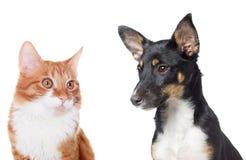 Observation de chiot et de chaton Photographie stock