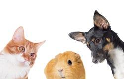Observation de chiot et de chaton Photos stock
