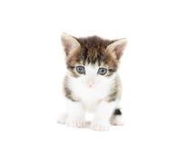 Observation de Kitty photo libre de droits
