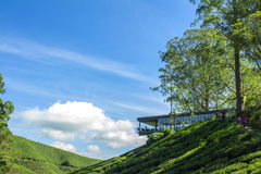 Observation deck in a tea plantation of Cameron Highlands Royalty Free Stock Photo