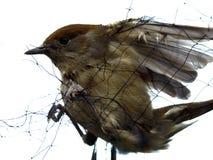 Observation des oiseaux Photo stock