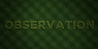 OBSERVATION - fresh Grass letters with flowers and dandelions - 3D rendered royalty free stock image Royalty Free Stock Photos