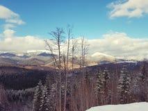 Mountain view in ski resort Bukovel, Carpathians, Ukraine. Observation  mountains ski resort bukovel carpathians ukraine  wood view landscape scenery  lift royalty free stock images