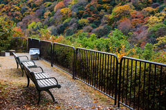Observation seats for autumn color, Arashiyama. Top view observation relax seats to enjoy autumn foliage in Arashiyama, Kyoto, Japan Royalty Free Stock Image