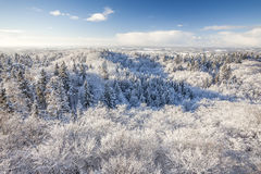 The observation tower on a hill in the winter forest Stock Photography