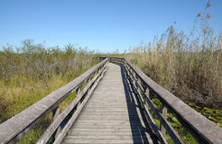 Observation Trail in the Everglades Stock Photos