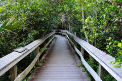 Observation Trail in the Everglades Stock Photography