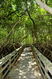 Observation trail in the Everglades National Park Stock Images