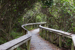 Observation trail, Everglades Royalty Free Stock Image