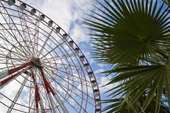 Observation wheel. Big red and white observation wheel and palm leaves in Batumi stock photography