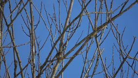 From the life of birds. Observations of different birds in the spring stock video footage
