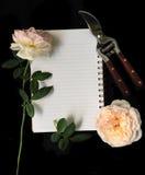 Observe las tijeras que cortan rosas Foto de archivo