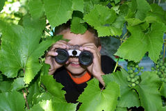 The observer. The boy looks in the flield-glass has hidden behind  grape leaves Stock Photos
