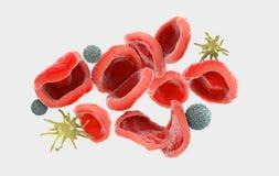 Observerade mycket nära rött, kallat erythrocytes, vita blodceller som kallades leukocyt och trombocyt royaltyfri illustrationer
