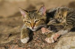 Observez le jeune petit chat images libres de droits