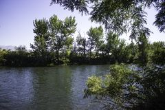Observing the Boise River. A view of the Boise River while walking the green walk stock photo