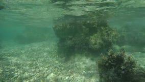 Observing rocky sea bottom stock video